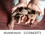 a producer's hand with fresh... | Shutterstock . vector #1113663371