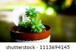 cactus in pot decorate home | Shutterstock . vector #1113694145