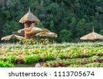 garden designs in high season... | Shutterstock . vector #1113705674