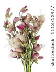 striped pink summer flowers... | Shutterstock . vector #1113752477