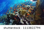 coral reef  red sea | Shutterstock . vector #1113822794