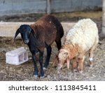sheep for the feast of... | Shutterstock . vector #1113845411