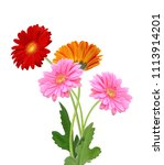 close up of orange  pink and... | Shutterstock . vector #1113914201