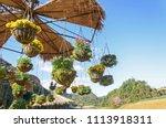 garden designs with hanging... | Shutterstock . vector #1113918311