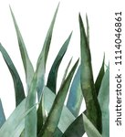 agave plant. watercolor...   Shutterstock . vector #1114046861