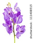 orchid flower branch with buds... | Shutterstock . vector #111408515