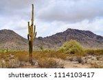 saguaro cactus cereus giganteus ... | Shutterstock . vector #1114103417
