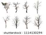 barren tree on isolated... | Shutterstock . vector #1114130294