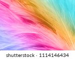 colorful chicken feathers in... | Shutterstock . vector #1114146434
