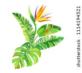isolated tropical bouquet... | Shutterstock . vector #1114194521