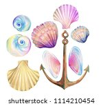 ocean set. sea shells   cockles ... | Shutterstock . vector #1114210454