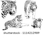 vector drawings sketches... | Shutterstock .eps vector #1114212989