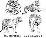 vector drawings sketches... | Shutterstock .eps vector #1114212995