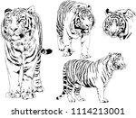 vector drawings sketches... | Shutterstock .eps vector #1114213001