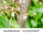 fresh small flower after rain... | Shutterstock . vector #1114225637