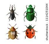 set of vector beetles. vector... | Shutterstock .eps vector #1114251044
