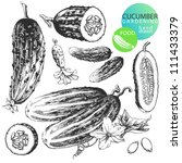 Highly detailed hand drawn illustrations of cucumbers isolated on white background