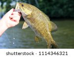 Close-up of a Smallmouth Bass with a lake in the background