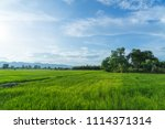 beautiful green young rice... | Shutterstock . vector #1114371314