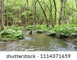 bolu  yedig ller national park  ... | Shutterstock . vector #1114371659