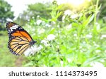 Stock photo a butterfly on flower under morning sun light 1114373495