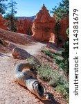 bryce canyon national park ... | Shutterstock . vector #1114381679