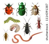 Set Of Different Insects And...