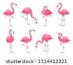 exotic pink flamingos birds.... | Shutterstock .eps vector #1114412321