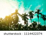 palm trees vintage toned  ... | Shutterstock . vector #1114422374
