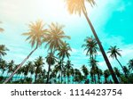 palm trees vintage toned  ... | Shutterstock . vector #1114423754