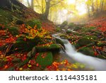 picturesque gold autumn image ... | Shutterstock . vector #1114435181