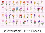your garden guide. top 50 most... | Shutterstock .eps vector #1114442351