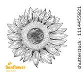 detailed hand drawn vector... | Shutterstock .eps vector #1114455821