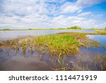 swamp and grass of everglades... | Shutterstock . vector #1114471919