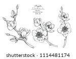 sketch floral botany collection.... | Shutterstock .eps vector #1114481174