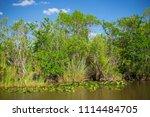 swamp and grass of everglades... | Shutterstock . vector #1114484705