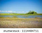 swamp and grass of everglades... | Shutterstock . vector #1114484711