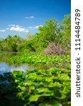 swamp and grass of everglades... | Shutterstock . vector #1114484789