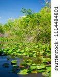 swamp and grass of everglades... | Shutterstock . vector #1114484801