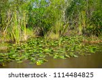 swamp and grass of everglades... | Shutterstock . vector #1114484825