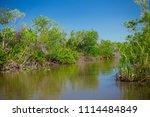 swamp and grass of everglades... | Shutterstock . vector #1114484849