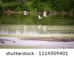 summer landscape. swamp  marsh  ... | Shutterstock . vector #1114509401