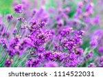beautiful blossoming wild... | Shutterstock . vector #1114522031