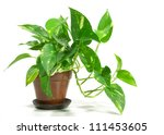 house plant  potted plant... | Shutterstock . vector #111453605