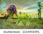 sugar palm tree in twilight | Shutterstock . vector #1114543391