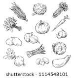 vector line drawing of various... | Shutterstock .eps vector #1114548101
