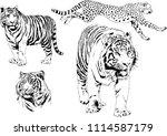 vector drawings sketches... | Shutterstock .eps vector #1114587179