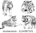 vector drawings sketches... | Shutterstock .eps vector #1114587191