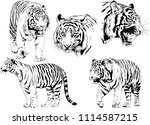 vector drawings sketches... | Shutterstock .eps vector #1114587215