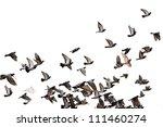 Flying Pigeons. Flock  Flight ...